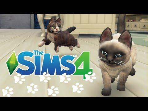 🍼The Sims 4 Challenge...Wyzwanie: 100 dzieciaczków #91 - Nowi członkowie rodzinki Johnson 🐱🐱