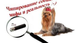 Чипирование собак: мифы и реальность