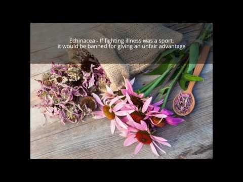 Warrior Organic Immunity Blend - Khroma Herbal Products