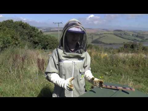 A Lazutin Hive at Village Farm, South Devon, UK