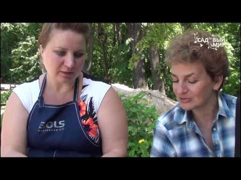 Как размножить сирень черенками видео