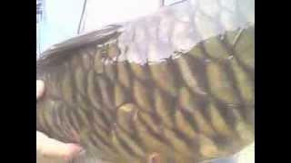 Копия видео рыбалка в Ирганае
