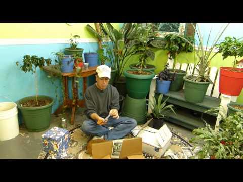 Worm Castings for Indoor gardening?