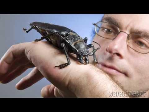 Вопрос: Жук-дровосек опасен ли для человека?