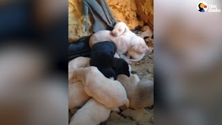 Stray Dog Leads Rescuers To Litter of Puppies | The Dodo