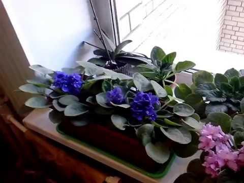 флорист приколы
