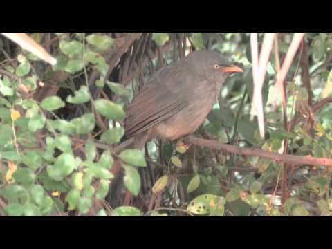 Keoladeo National Park (Bharatpur, India), a bird paradise
