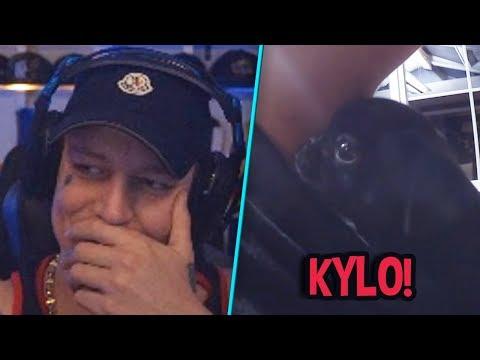 Kylo als kleiner Mops! 😍 Orangemorange Diss 😂 | MontanaBlack Highlights