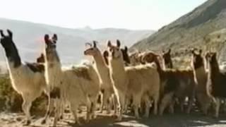 Las ocho (8) regiones naturales del Peru