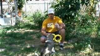 Урок № 6 Учим щенка правилам игры