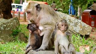 Popeye Stop Breastfeeding Poor Tiny Polly Baby Monkey! thumbnail