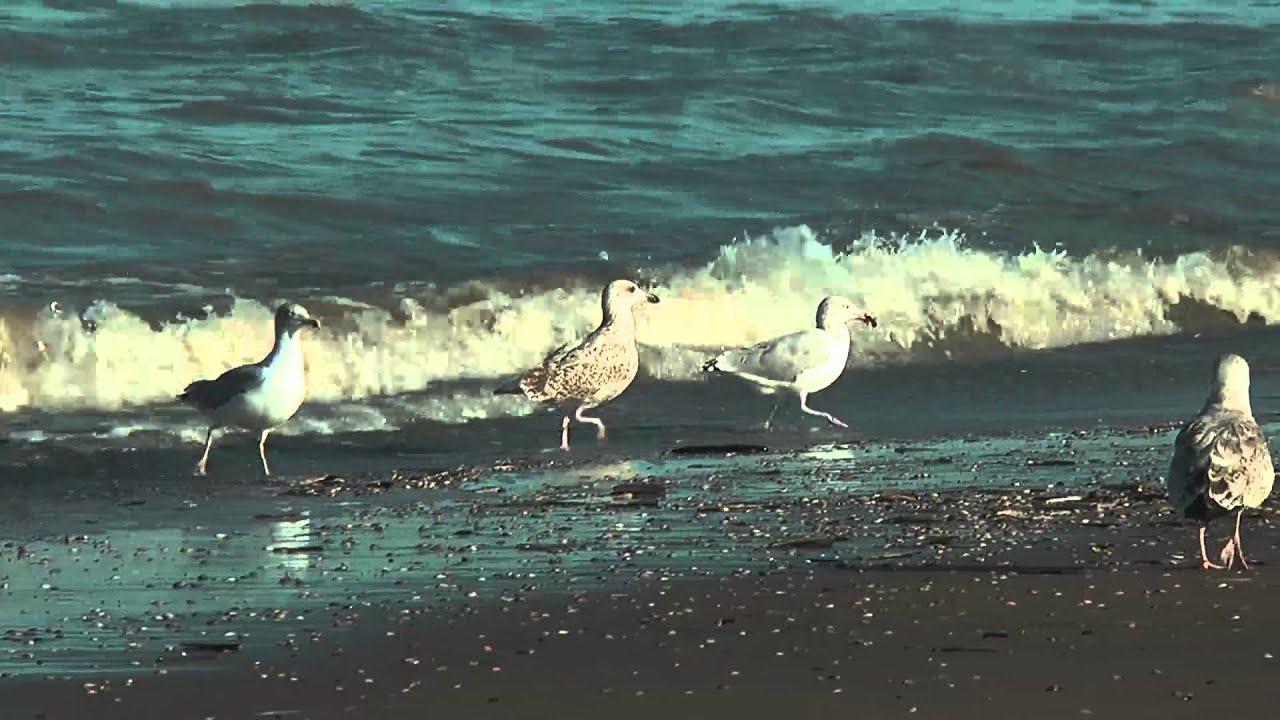Katwijkse Strand in 1080p HD