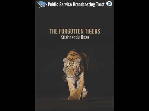 THE FORGOTTEN TIGERS