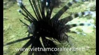 Coral Reef Dive Center, Nha Trang, Vietnam