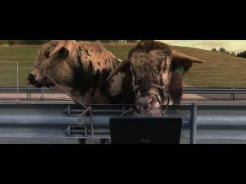 Talking Animals. Bulls actually understand English, the funniest animal commercial ever