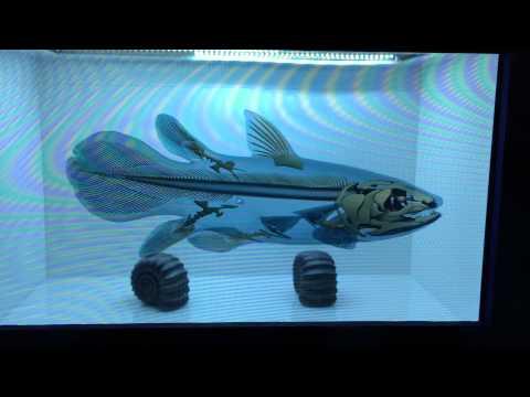 X-Ray A Fish