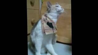 猫のくせです。 ・・・なめてるつもりなの?w.