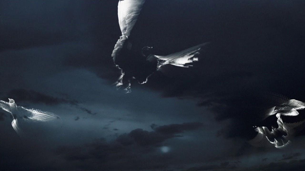 Death of a Gull