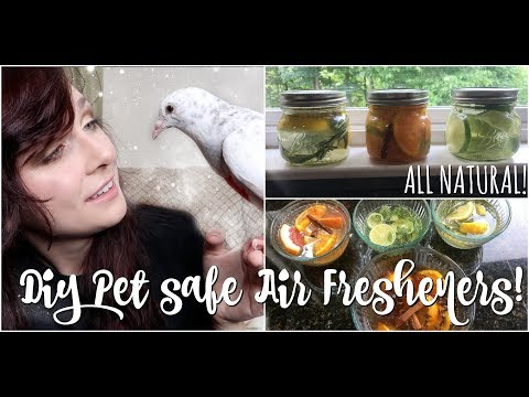 DIY BIRD / PET SAFE AIR FRESHENER RECIPES | All Natural Fragrances | Simmer Pots