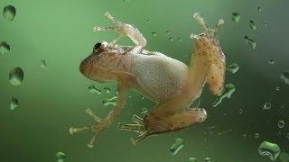 #663. Лягушки (В мире животных)
