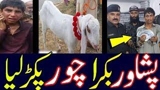 Peshawar 28000  ka Bakra Frad Choor Pakra Gaya Dunya tv