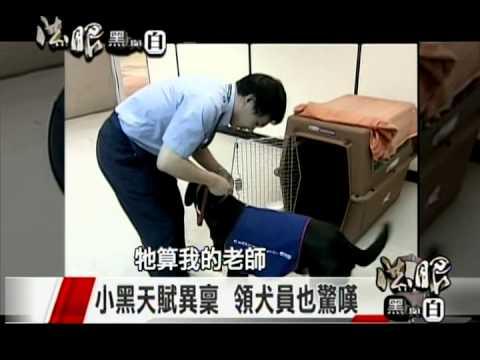 法眼黑與白-國境緝毒特別報導4(第一隻緝毒犬)