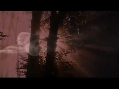 The Bonaparte's - Battle Of iena (Official Music Video)