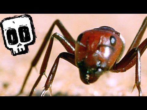 Spoor Spider vs Dune Ant - Deadliest Showdowns (Ep 10) - Earth Unplugged