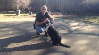 Dorie | Redeeming Dogs | Dallas/fort Worth Dog Training | Tod Mcvicker Dog Trainer