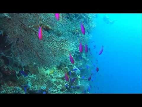 Philippines , Bohol , Panglao , Balicasag island scuba diving video