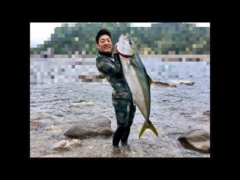 素潜りでモンスターヒラマサに挑む [123cm,推定20kg,魚突き,pole spearfishing]