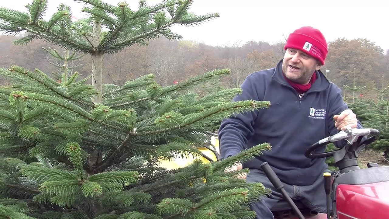 Choosing a Christmas tree – four different types - YouTube