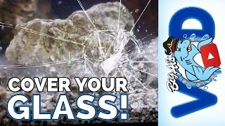Cover Your Glass! • Quick Tip | Big Al's