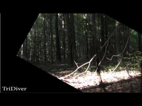 Bigfoot footage from Western NY Bigfoot.