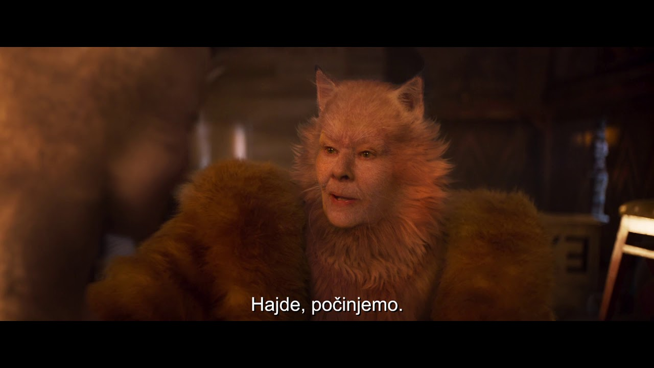 Cats Kino