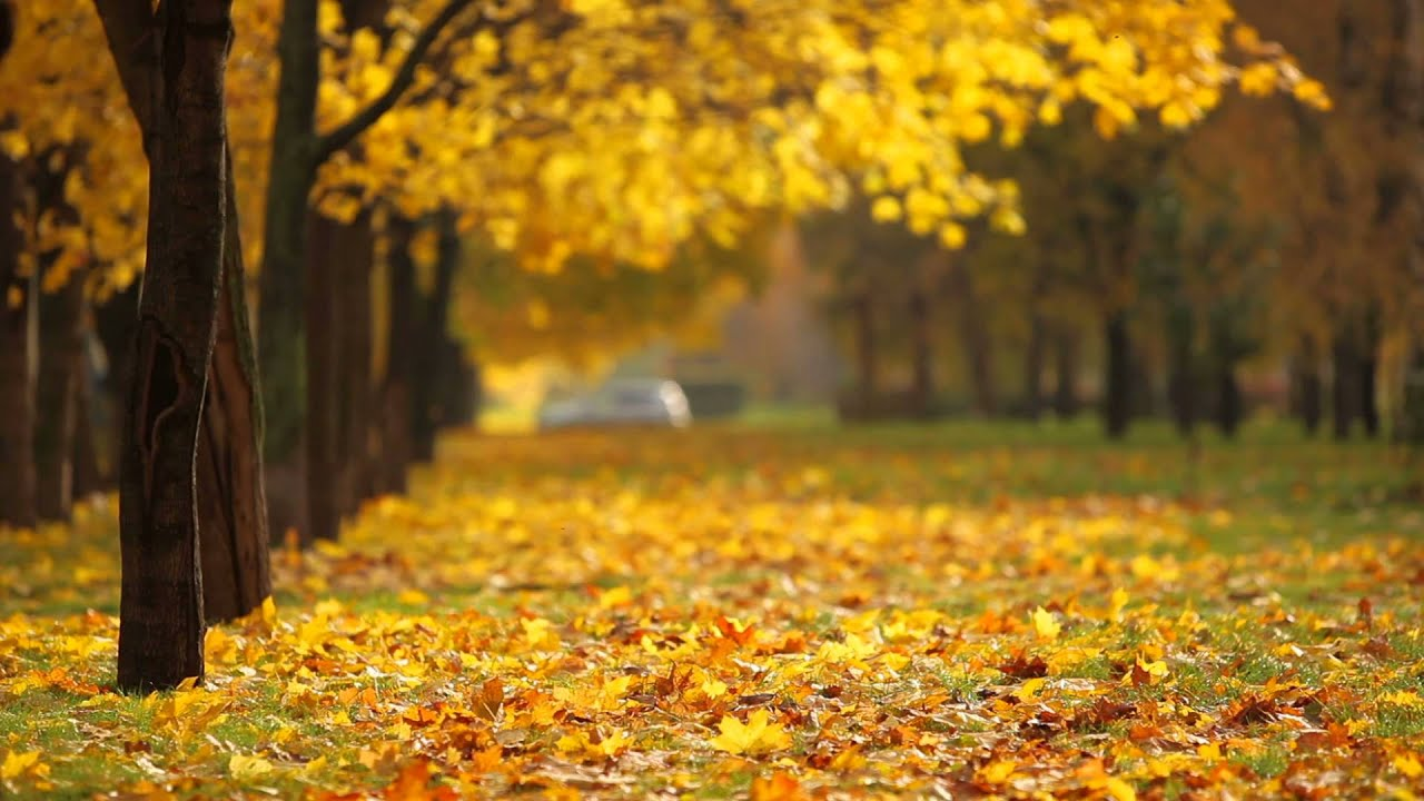 Falling Leaves Hd Live Wallpaper Fall Background Video Youtube