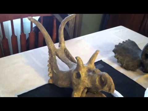 Nine Ceratopsian  dinosaur skull sculptures