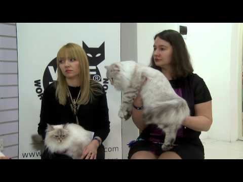 Khristina Moiseeva (Russia) during the MFGC 2014 Grand International Cat Show