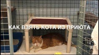 🐱 Как взять кота из приюта, говорящего. Канада. «Усыновление» домашнего животного