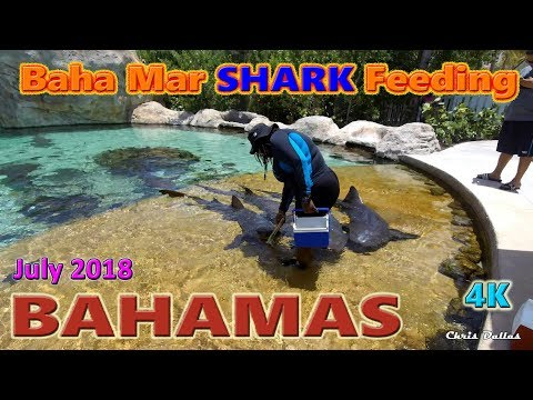 Baha Mar Feeding Of The Sharks & Turtles Bahamas July 9-16 2018