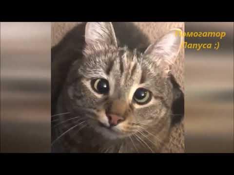 Говорящие коты! Сборник №2