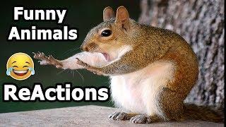 Funny Animals ReActions | ردود فعل مضحكه للحيوانات