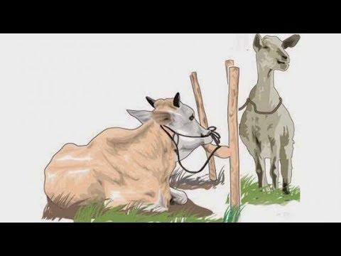 970 Gambar Animasi Penyembelihan Hewan Qurban Gratis Terbaru
