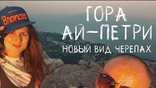 Гора Ай-Петри, Крым. Новый вид черепах.