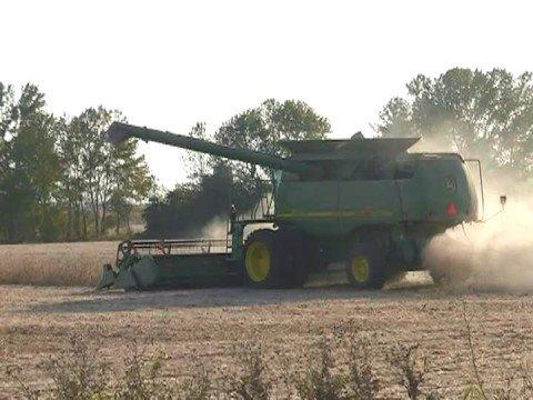 KLEIN FARMS CUTTING BEANS 2008