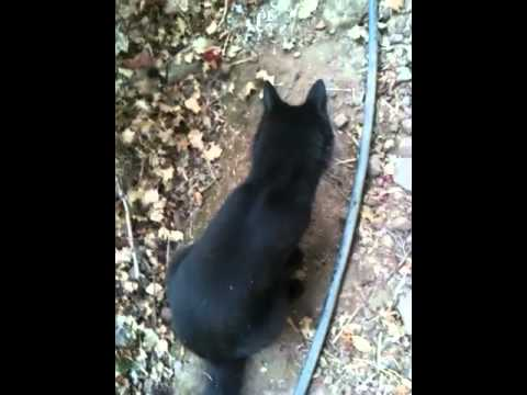 Cat Eats And Throws Up