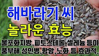 [#해바라기씨효과] 해바라기씨의 놀라운 효능 10가지 …