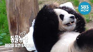 [TV 동물농장] Ep.959 예고 '꽃단장부터 장기자랑 준비까지! 동물원엔 무슨 일이?' / 'Animal Farm' Preview | SBS NOW