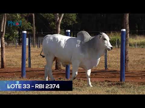 LOTE 33 - RBI2374 - NELORE