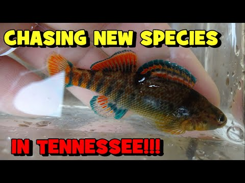 Family EMERGENCIES Took Me To TENNESSEE!!! (MULTIPLE NEW SPECIES ALERT)